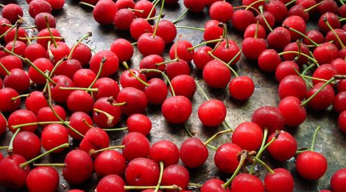 Visne fotografları – cherry photos (16)