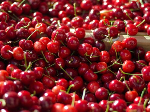 Visne fotografları – cherry photos (18)