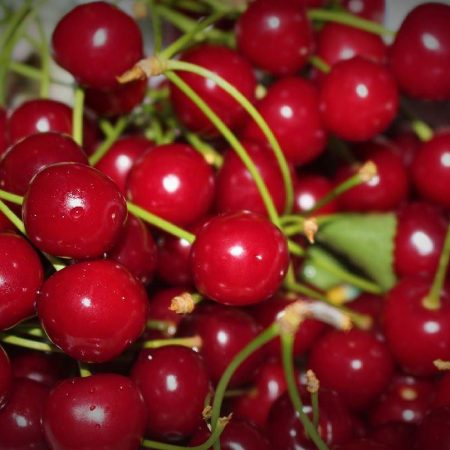 Visne fotografları – cherry photos (30)