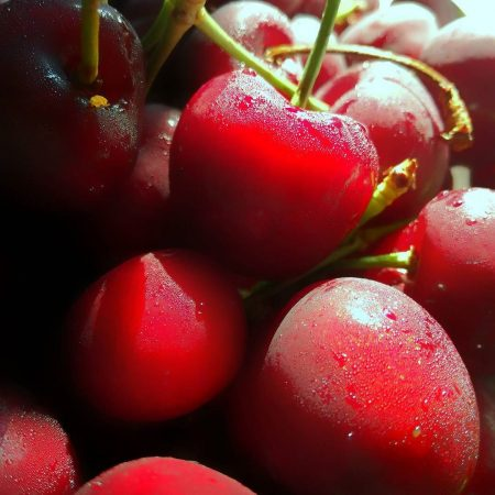 Visne fotografları – cherry photos (33)
