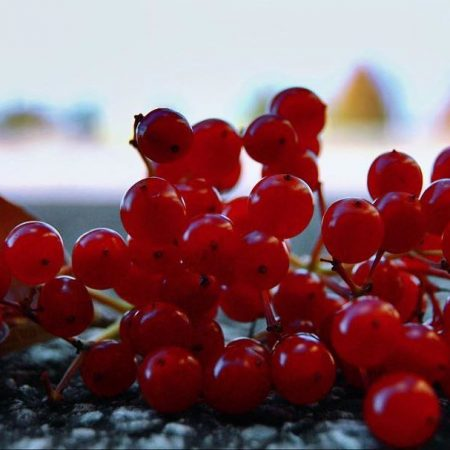 Visne fotografları – cherry photos (39)